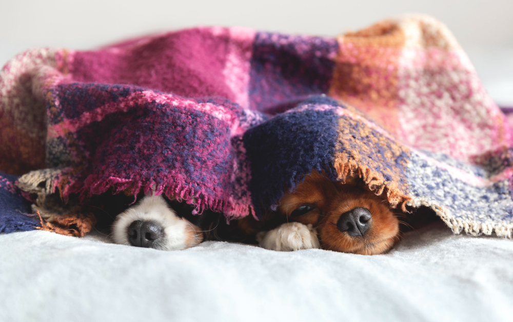 Six heating options if you're feeling the chill